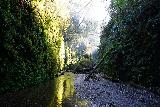 Fern_Canyon_Gold_Dust_Falls_065_11212020 - Looking back at attractive incident lighting within Fern Canyon while we retreated back to the mouth of the canyon