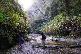 Fern_Canyon_Gold_Dust_Falls_069_11212020 - Tahia and Julie going back across the same stream crossings that we did on the way up Fern Canyon