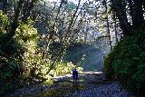 Fern_Canyon_Gold_Dust_Falls_075_11212020 - Looking back at other people making the adventure into Fern Canyon