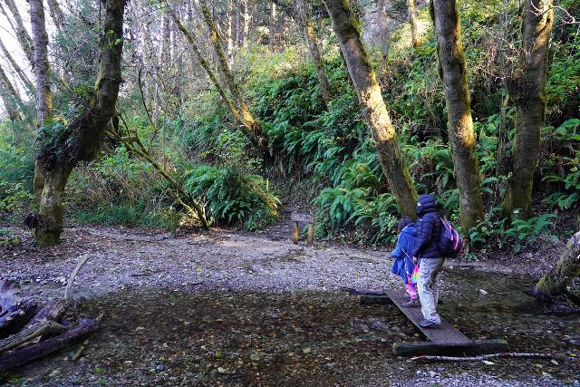 Fern_Canyon_Gold_Dust_Falls_076_11212020 - Julie and Tahia crossing the plank bridge over Home Creek at the mouth of Fern Canyon to continue towards the James Irvine Trail