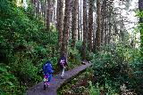 Fern_Canyon_Gold_Dust_Falls_085_11212020 - Julie and Tahia on a boardwalk part of the James Irvine Trail