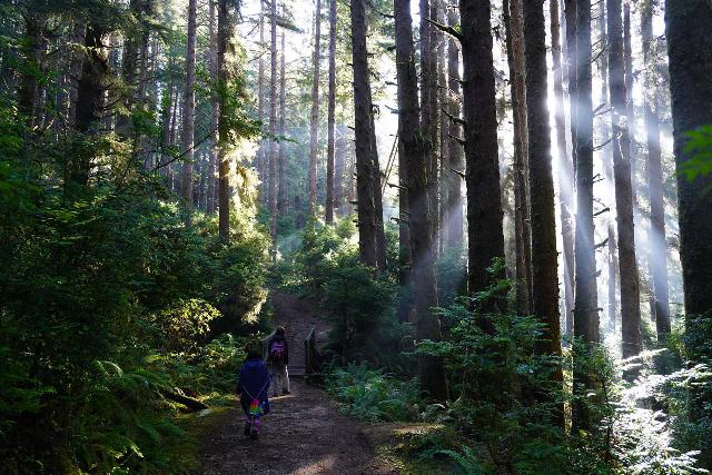 Fern_Canyon_Gold_Dust_Falls_092_11212020 - Julie and Tahia continuing along the James Irvine Trail as the morning sun produced dazzling god beams between the firs and redwoods