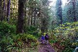 Fern_Canyon_Gold_Dust_Falls_115_11212020 - Julie and Tahia continuing deeper into the James Irvine Trail and the lush forest interior
