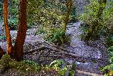 Fern_Canyon_Gold_Dust_Falls_153_11212020 - Back down at the upper reaches of Fern Canyon where I already had to pick my steps to cross Home Creek