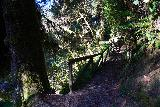 Fern_Canyon_Gold_Dust_Falls_175_11212020 - Continuing to climb back up out of Fern Canyon and towards the James Irvine Trail