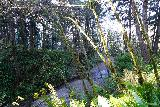 Fern_Canyon_Gold_Dust_Falls_190_11212020 - Looking down at the mouth of Fern Canyon as the James Irvine Trail descended back down towards it