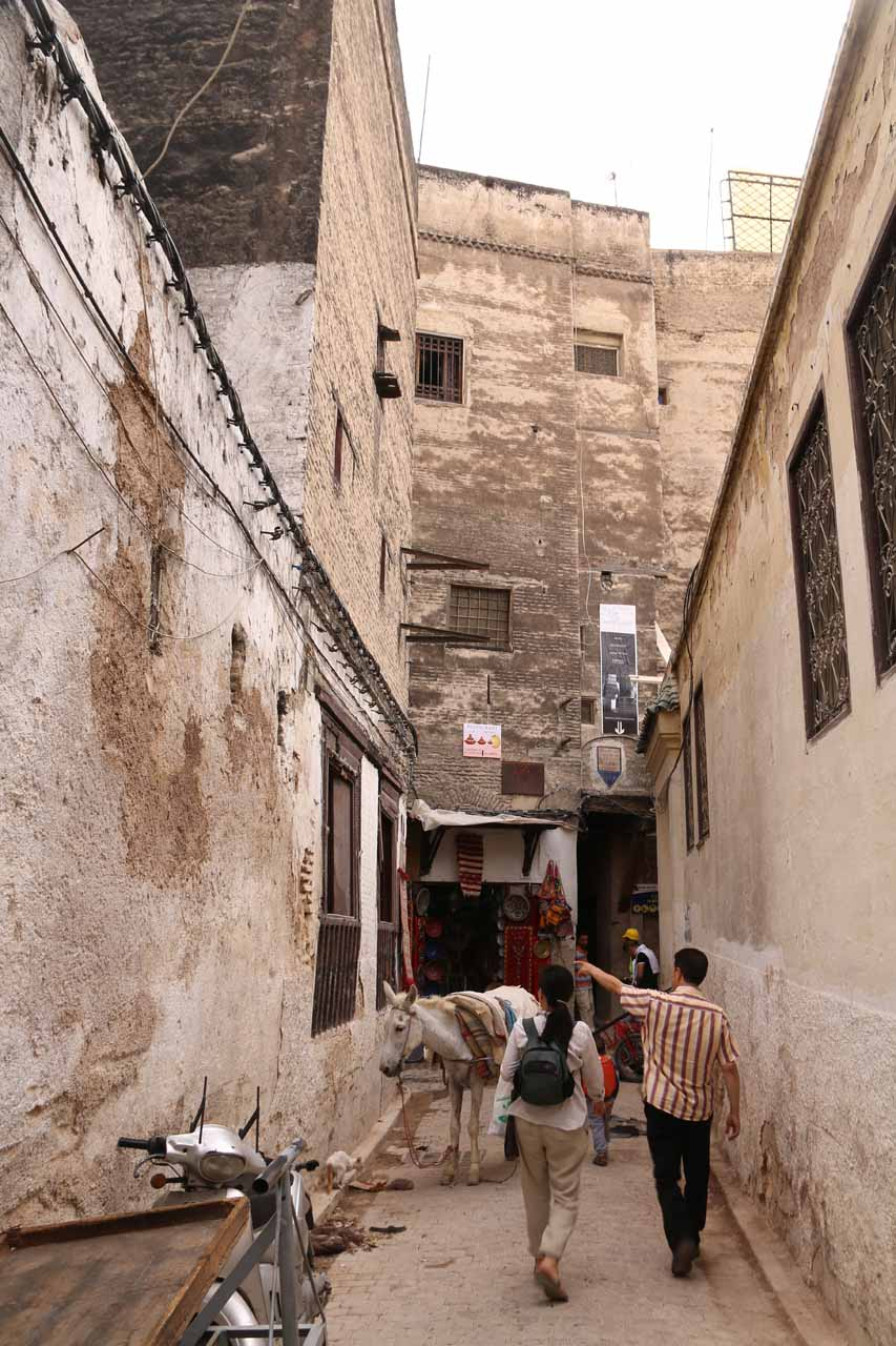 Walking past more mules and through narrow alleyways on our way to the tanneries of Fes