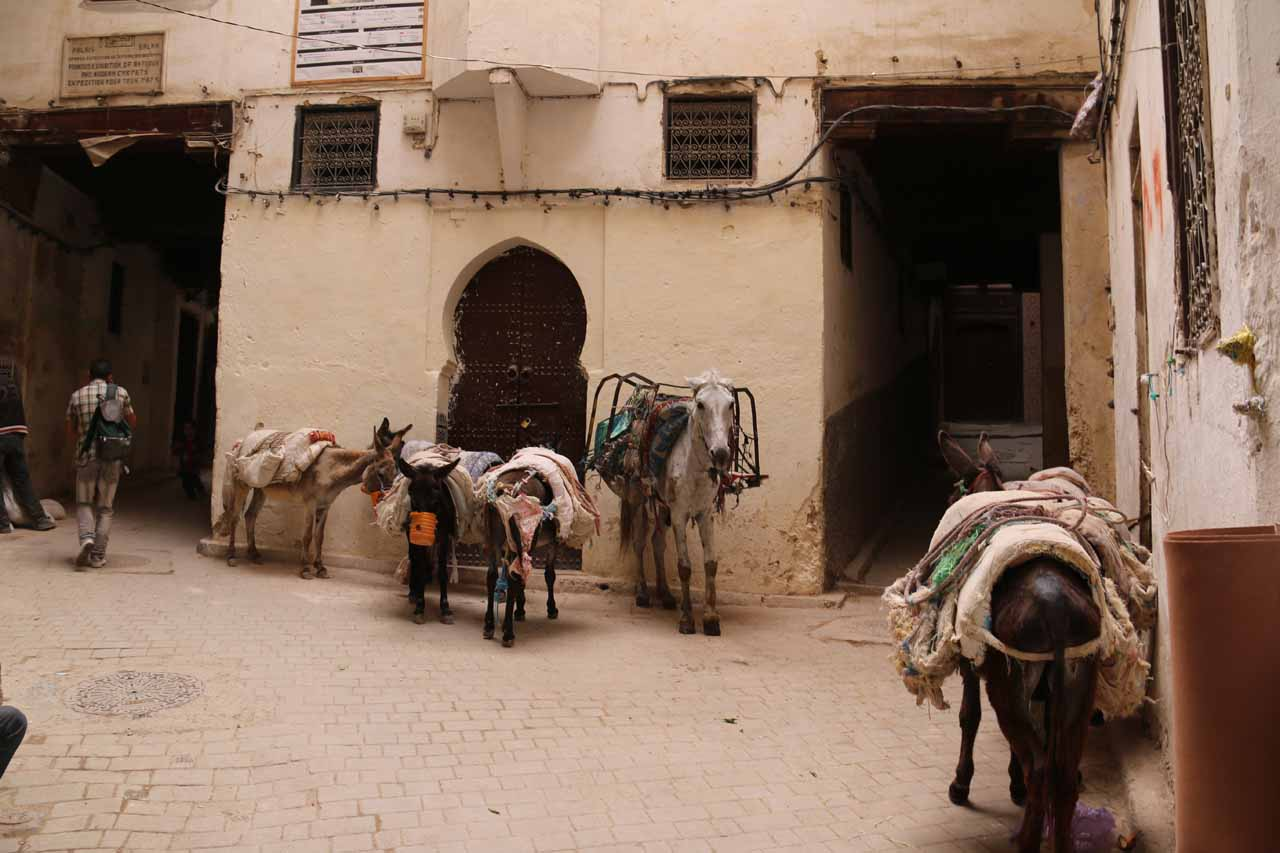 A little mule parking area in the medina of Fes