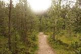Fettjeafallet_007_07112019 - On the forested trail to Fettjeafallet