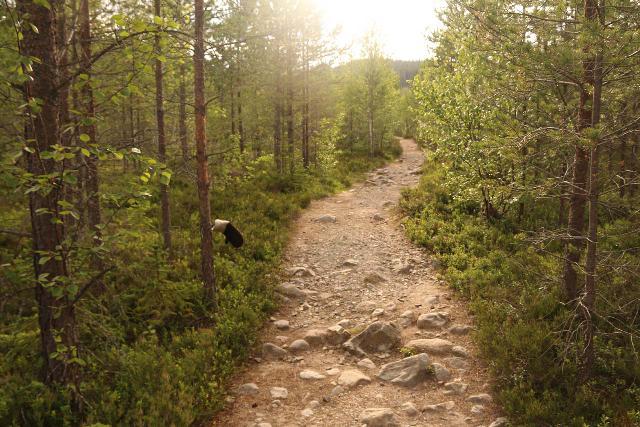 Fettjeafallet_009_07112019 - Pretty straightforward hiking in the first kilometer of the trail to Fettjeåfallet