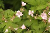 Fettjeafallet_065_07112019 - Closer look at some of the wildflowers blooming near Fettjeafallet