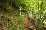 Finsterbach_Waterfalls_051_07112018 - Signed trail junction where keeping straight ahead would take me on the short spur to the bottom of the second of the Finsterbach Waterfalls