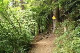 Finsterbach_Waterfalls_106_07112018 - Looking back at a trail junction as I pursued the last of the Finsterbach Waterfalls