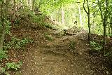 Finsterbach_Waterfalls_107_07112018 - The trail up to the last of the Finsterbach Waterfalls still ascending roots and dirt in a well-shaded and forested part of the excursion