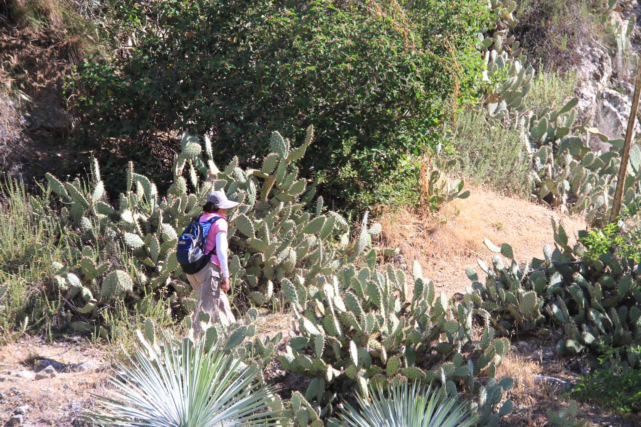 Mom going between a few stalks of cacti on the Fish Canyon Trail