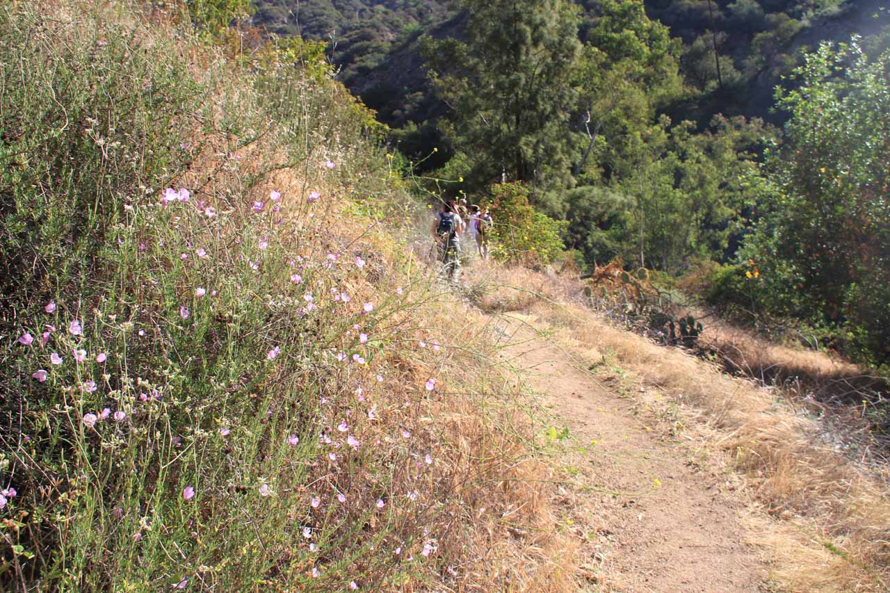 More wildflowers blooming alongside the Fish Canyon Trail