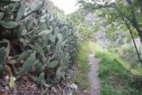 Fish_Canyon_Falls_005_03272010 - Cacti along the trail