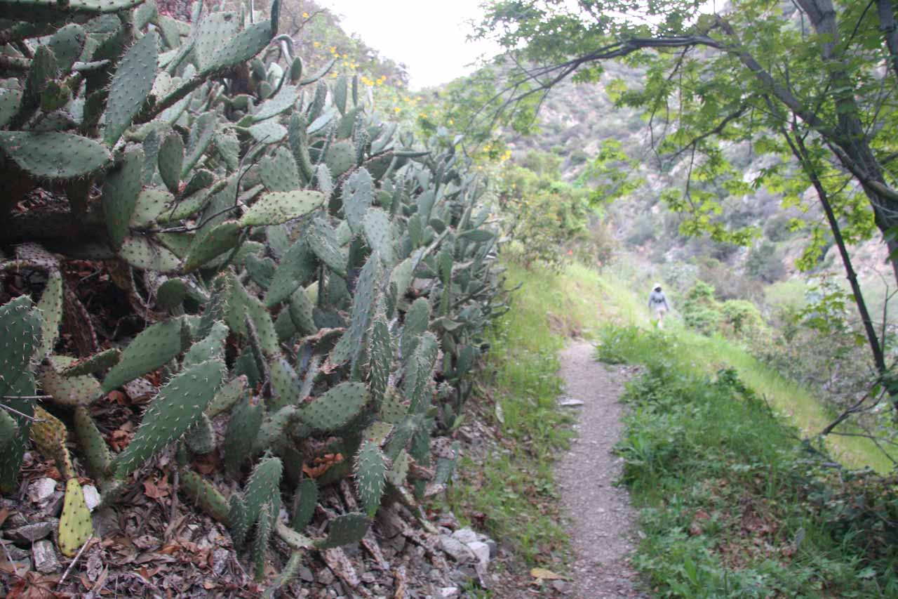 Cacti along the trail