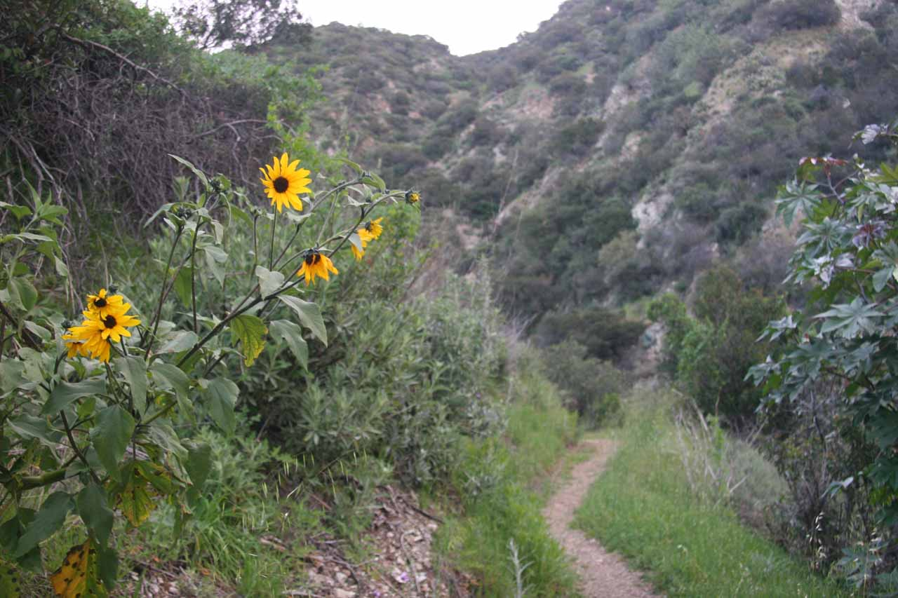 Some wildflowers blooming along the trail