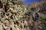 Fish_Canyon_Falls_037_02132016 - The party passed this grove of cacti, which underscored how dry and arid that Fish Canyon could be