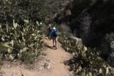 Fish_Canyon_Falls_059_02132016 - The trail passing right between several groves of cacti