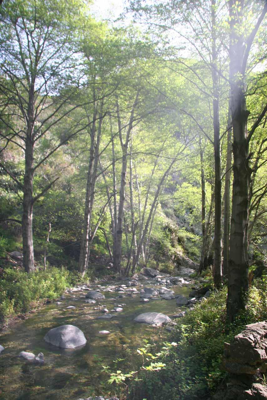 Pretty nice look at Fish Creek