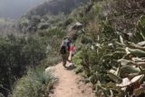 Fish_Canyon_Falls_128_02132016 - The hiking party went back past some large groves of cacti