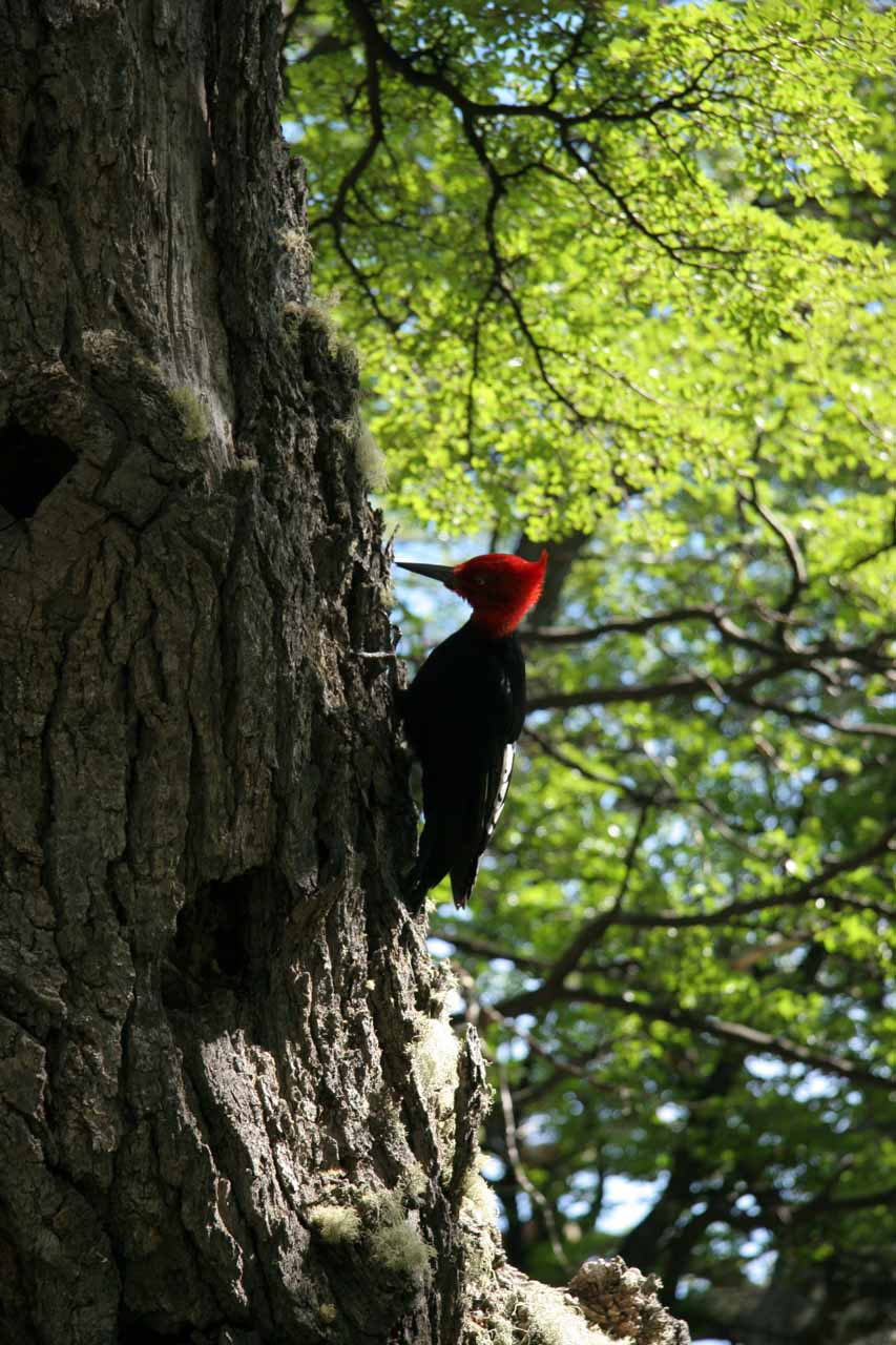 Another woodpecker spotted along the trail