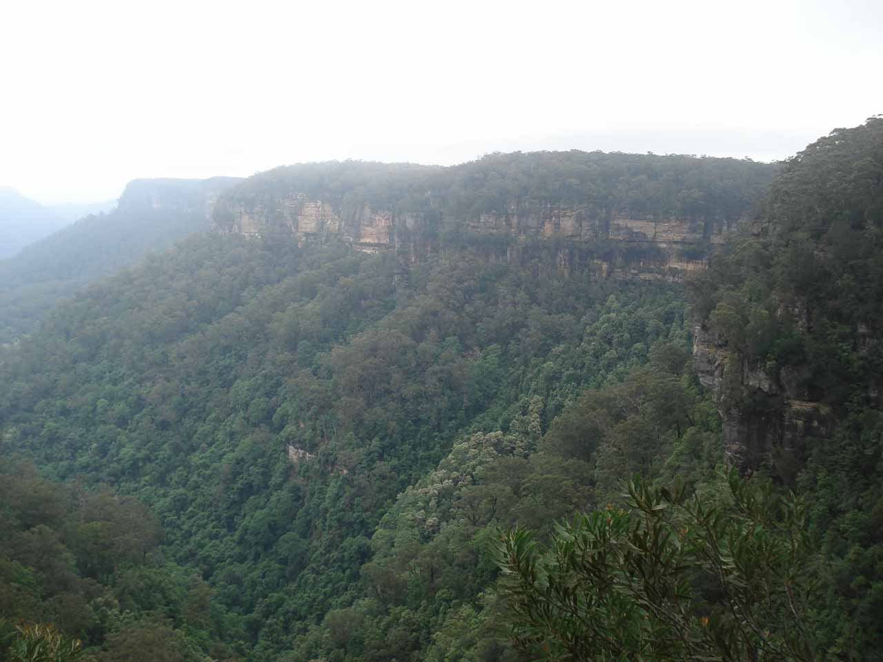 Examining the cliffs on the opposite side of the valley as we were walking towards the more distant views of Fitzroy Falls