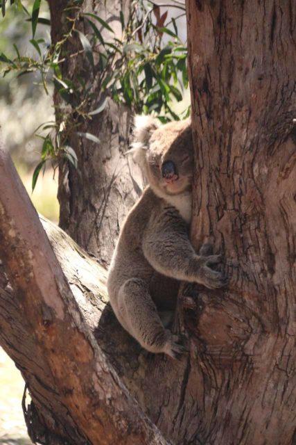 Flinders_Chase_VC_007_11122017