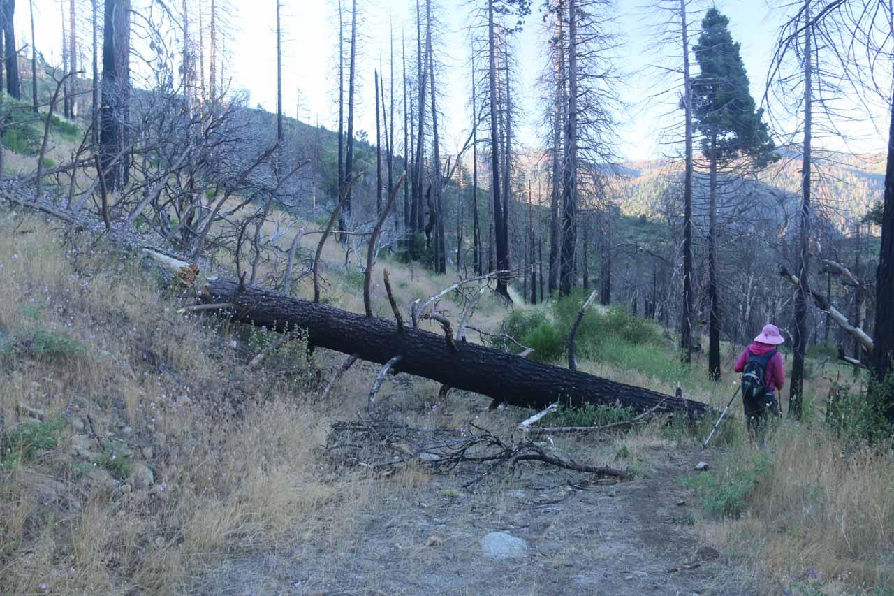 This was one of the deadfall obstacles that was a casualty of the fires that have come through Foresta