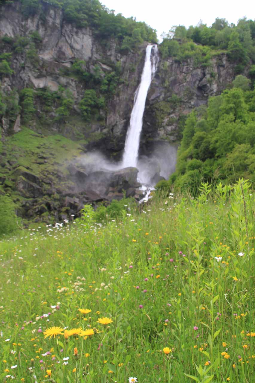 Looking over some pretty wildflowers in bloom towards Cascata di Foroglio