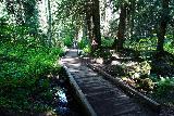 Franklin_Falls_047_06202021 - Some platforms or bridges built for the Franklin Falls Trail