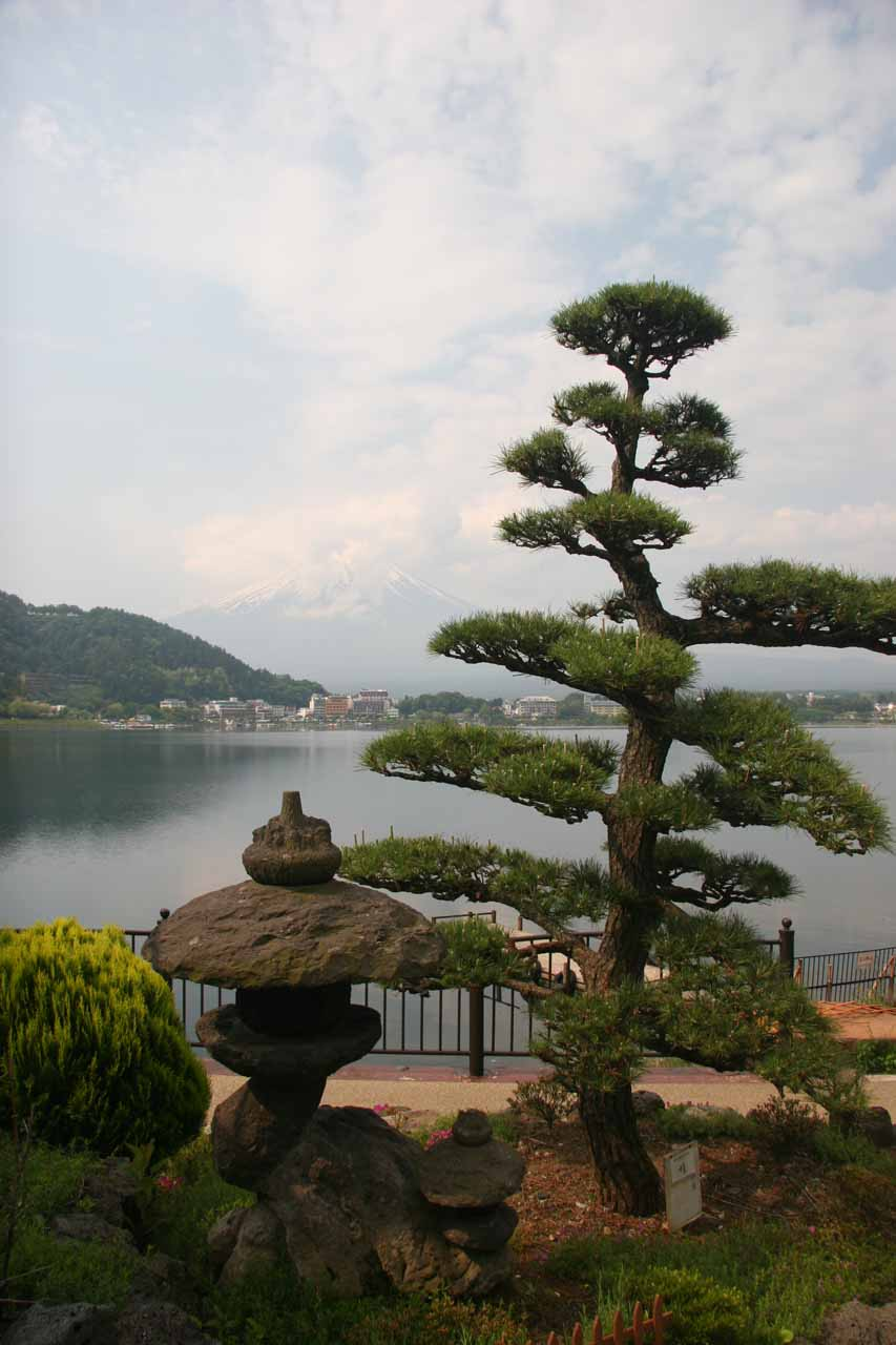 Some interesting trees seen alongside the Kawaguchiko Lake