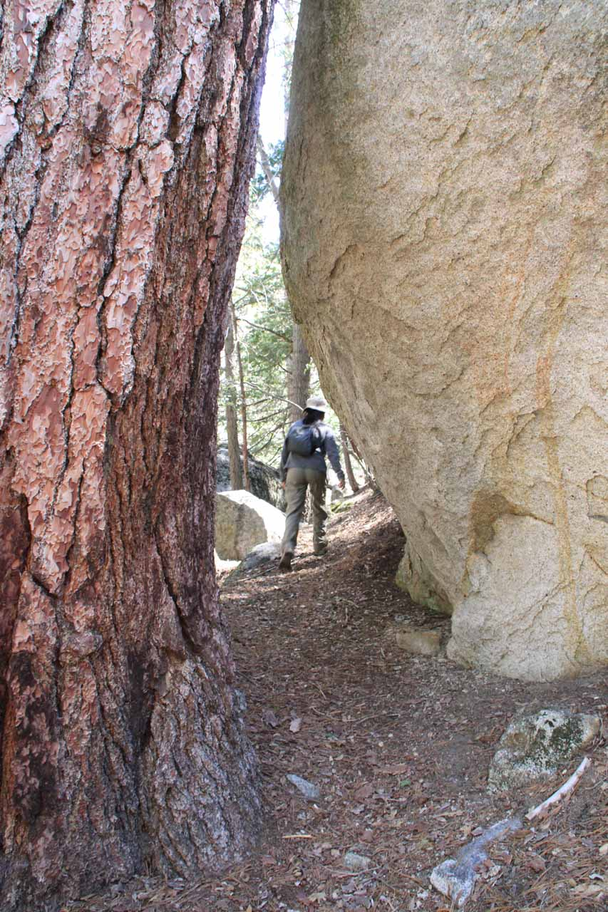 Back in 2011, we attempted to find the Fuller Mill Creek Falls and we managed to follow what we thought was a trail that caused us to skip the main falls altogether