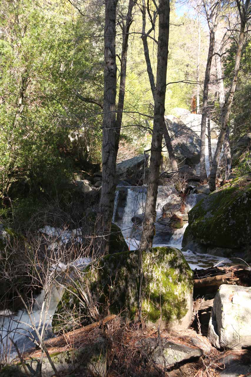 Obstructed view of the context of Fuller Mill Creek Falls