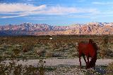 Galleta_Meadows_060_02082019 - A horse sculpture fronting attractive mountains from Galleta Meadows in Borrego Springs