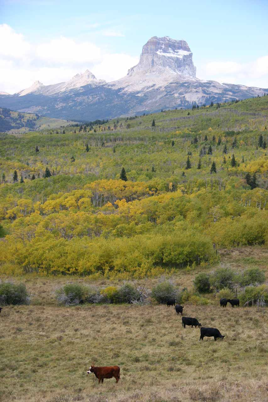 Chief Mountain fronted by cow pastures