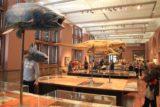 Glasgow_289_08302014 - Inside the Kelvingrove Museum