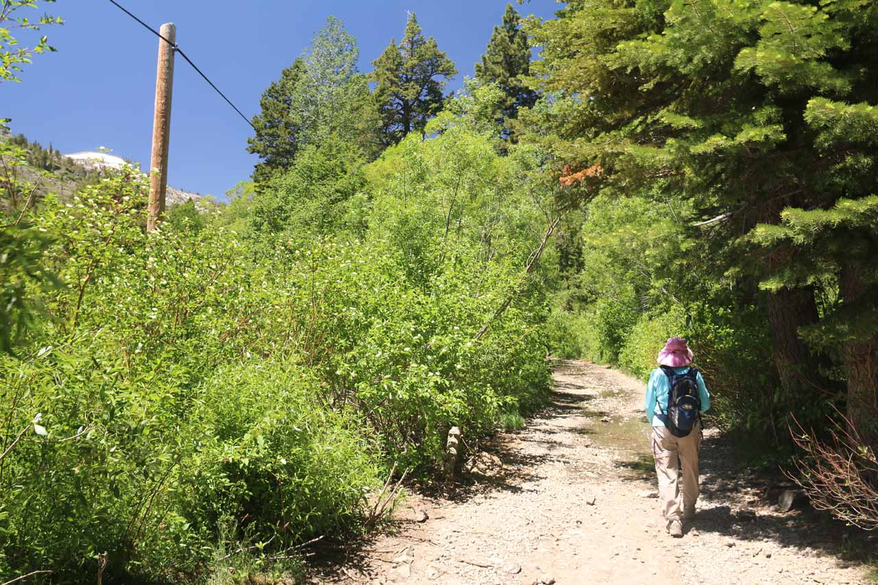Mom on the trail leading to both Modjeska Falls and the Glen Alpine Springs Resort further on