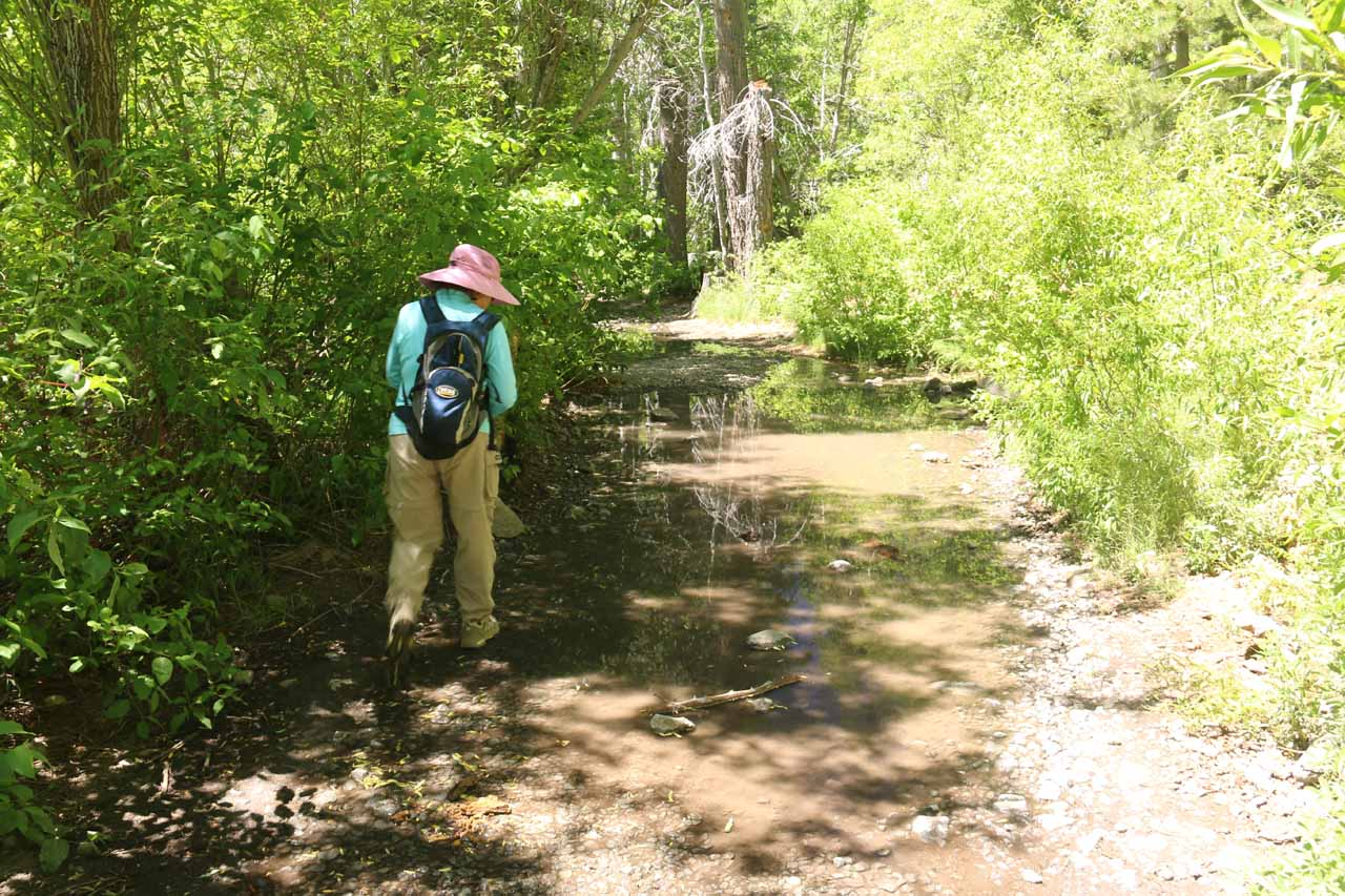 One bad thing about doing this hike early in the season was that there were flooded sections like this one, which we had to skirt around the mud carefully