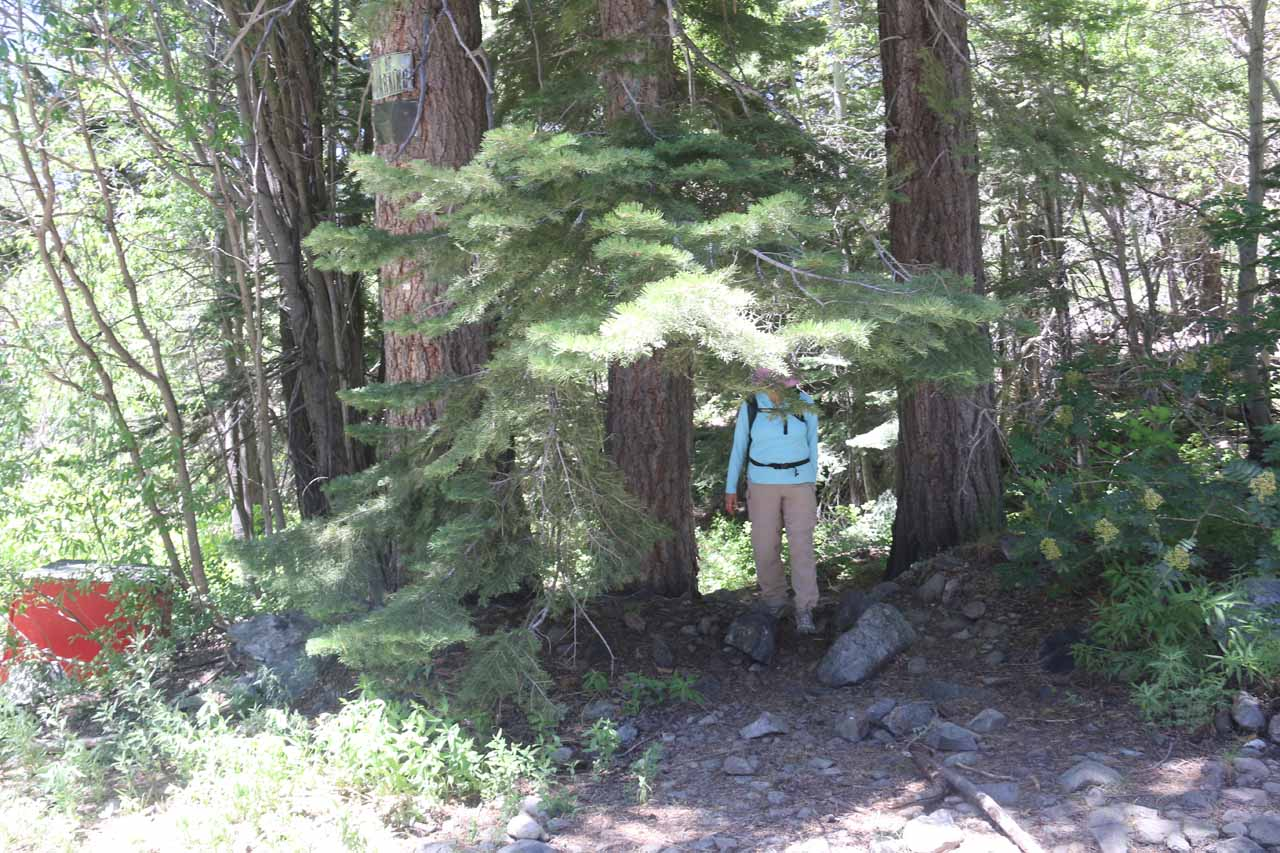 Mom coming out of the informal trail and rejoining the road/trail