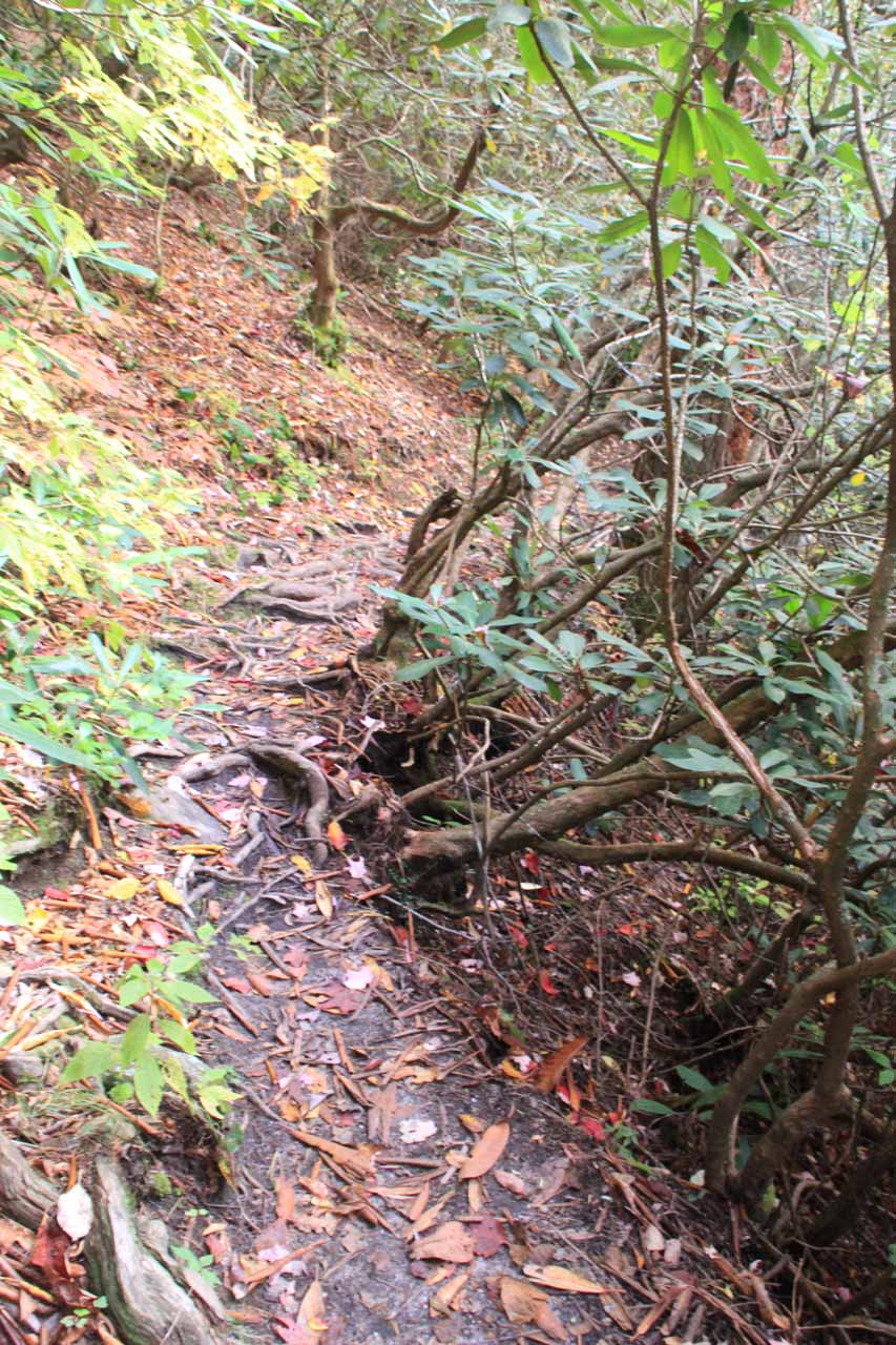 An eroded part of the trail exposing tree roots just past the second waterfall