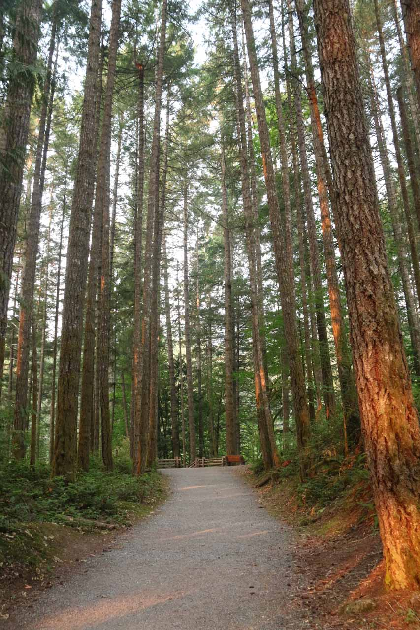 Following the flat forested path towards the steps on the Goldstream Falls Trail
