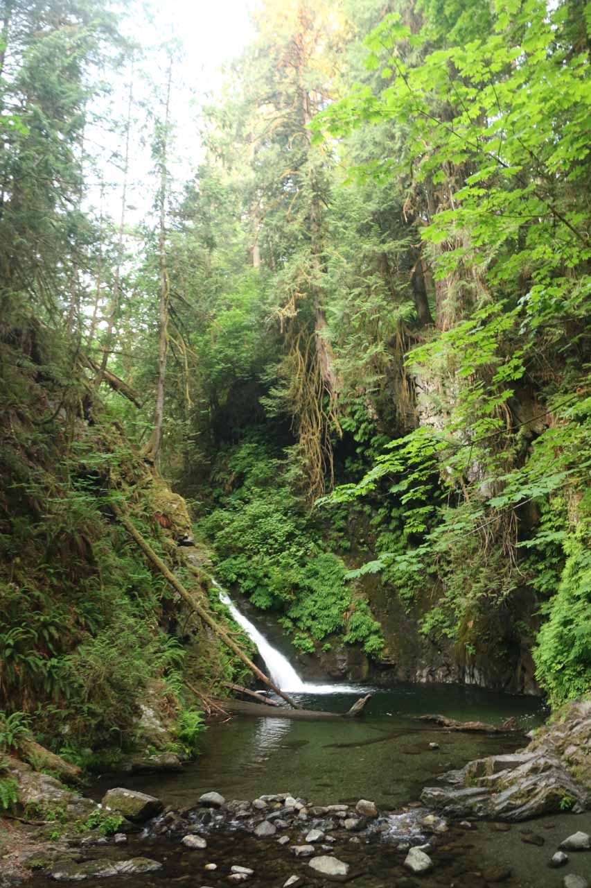 Contextual look at Goldstream Falls flanked by lush scenery