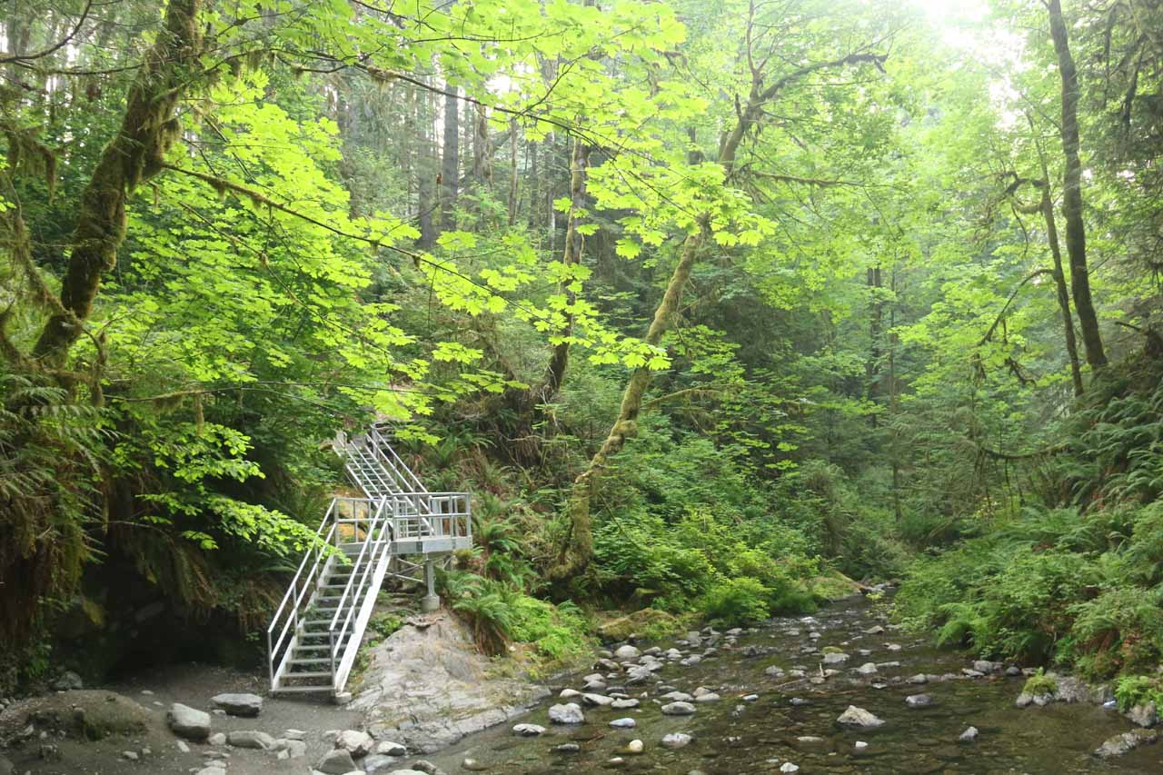 Looking back at the steps I had to descend to get to the base of Goldstream Falls