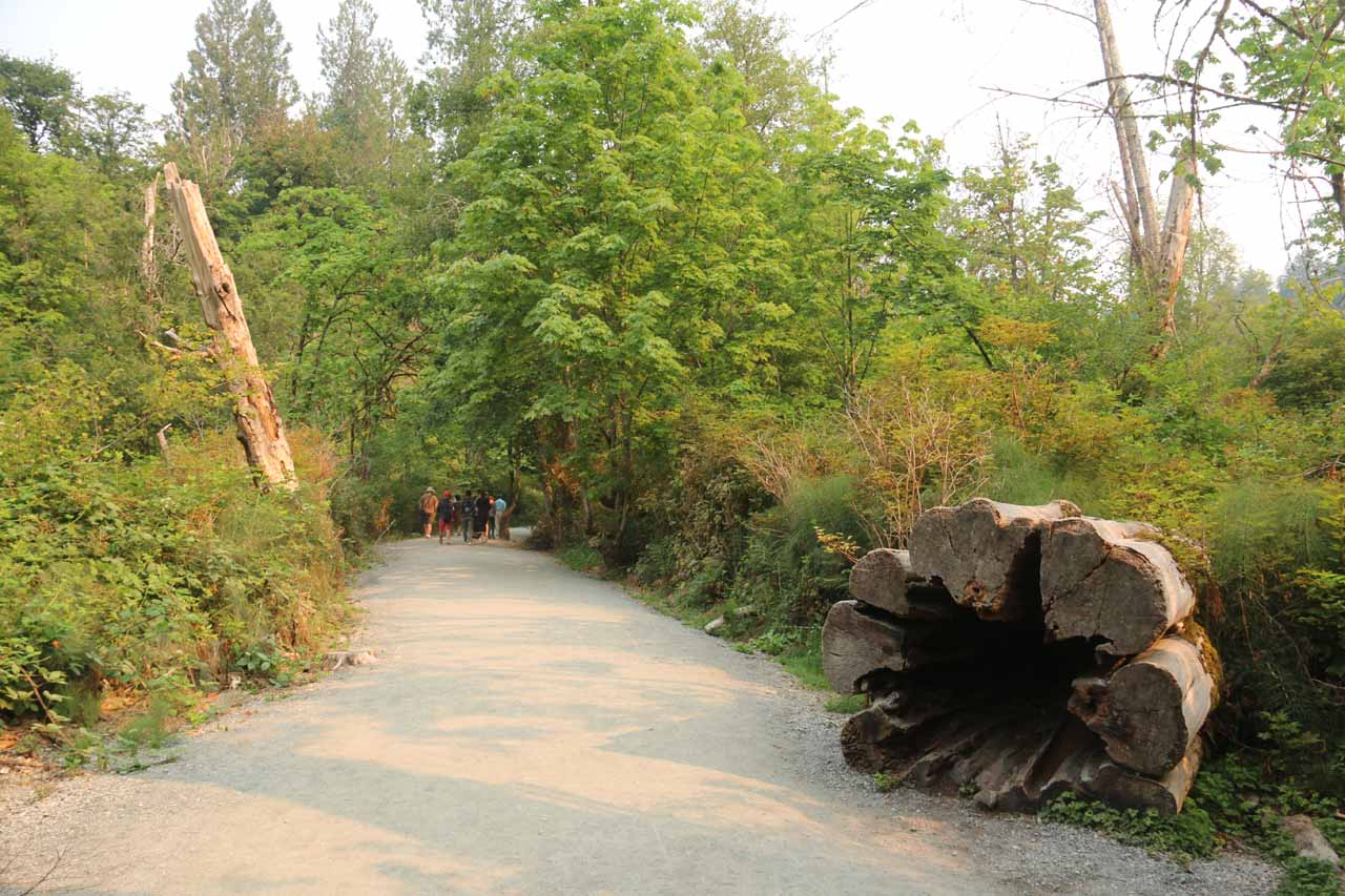 This was the wide and flat trail leading towards the Goldstream Provincial Park Visitor Centre