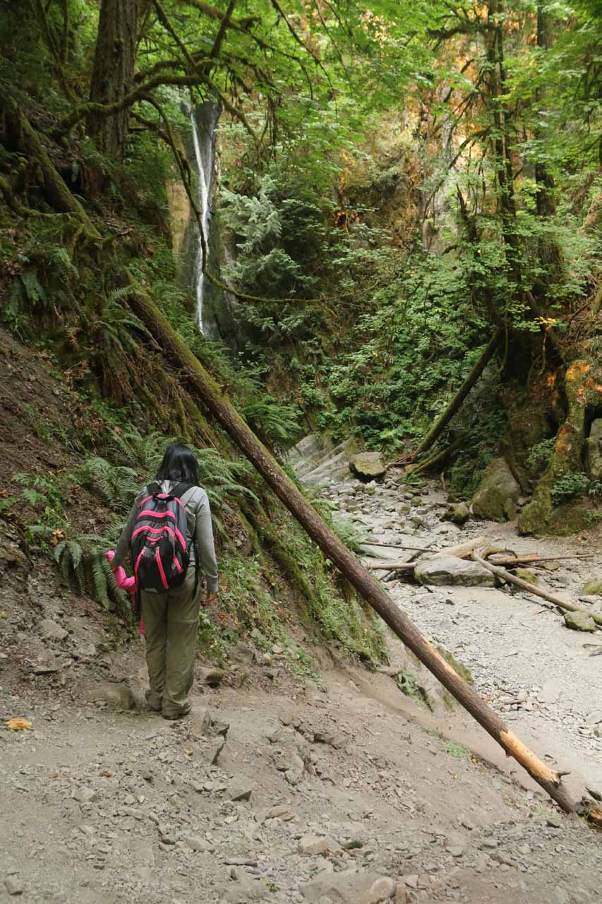 When we started to see the Goldstream Niagara Falls, we got to the end of the trail and further progress meant we had to scramble down the hillside to our right