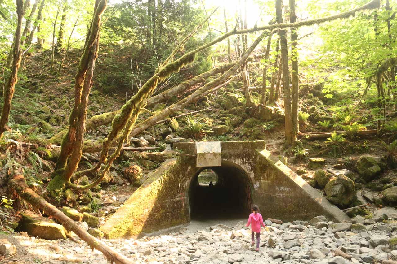 Tahia returning to the tunnel