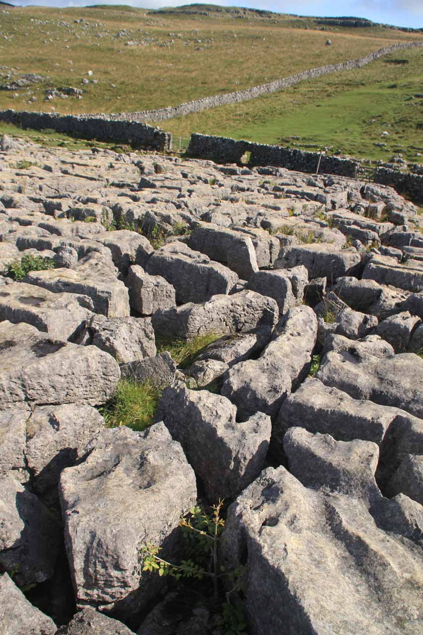 A closer examination of the uneven limestone surface above the Malham Cove